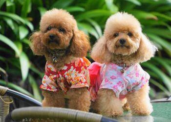Masmasgroomers Pet Grooming Centre