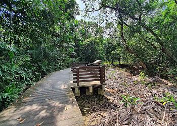 Pasir Ris Park Mangrove Boardwalk